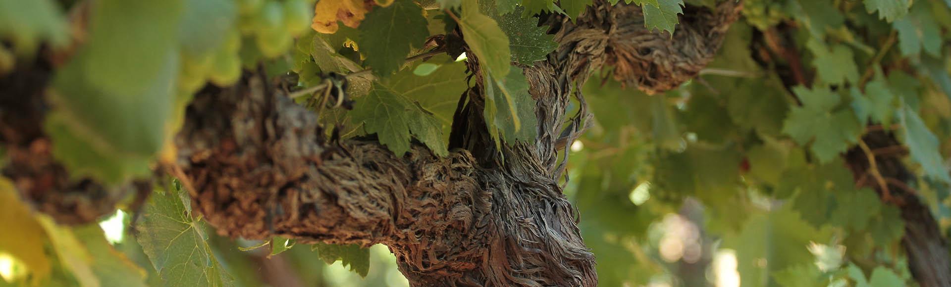 Le meilleur du rosé de Provence en vente sur internet